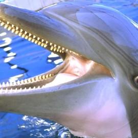 Тайна секретного объекта — боевые дельфины Севастополя