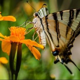 Бабочки Крыма — фото