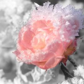 Цветы не в сезон
