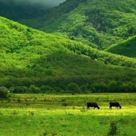 Байдарская долина — фото