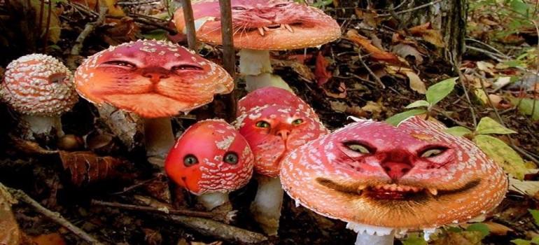 Ядовитые грибы Крыма
