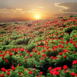 Самые красивые и опасные растения Крыма