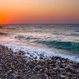 Кто живет в Черном море?